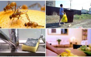 Como se livrar de pequenas moscas no apartamento