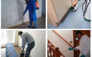 Disinsection das pulgas no apartamento por serviços profissionais