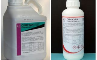 Remédio de Sinuzan para bedbugs