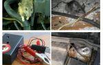 Como se livrar de ratos sob o capô de um carro