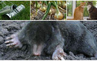 Remédios para verrugas na cabana de verão e jardim