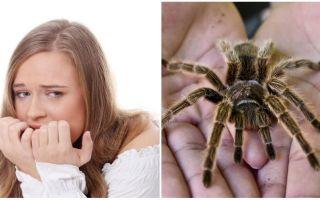 Qual é o nome do medo de aranhas (fobia) e métodos de tratamento
