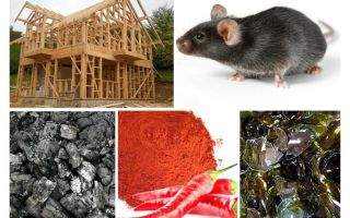 Proteção da casa de armação contra ratos