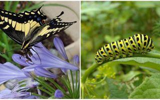 Transformando uma lagarta em uma borboleta