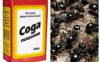 Refrigerante contra formigas no jardim