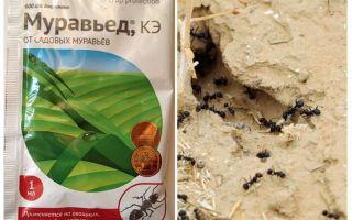 Ant remedy Anteater instrução e avaliações