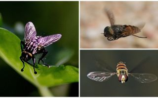 Velocidade da mosca