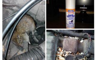 Ratos de spray para o carro