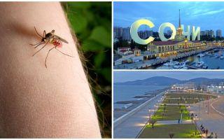 Existem mosquitos em Sochi e Adler?
