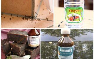 Lutando contra formigas em uma casa ou apartamento