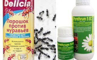 Veneno de formiga em um apartamento ou casa