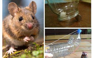Como pegar um rato em uma casa sem uma ratoeira