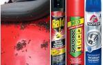 Como tirar as formigas do carro