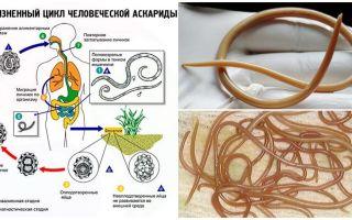 Sintomas e tratamento da ascaridíase em adultos