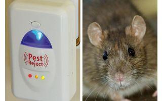 Pest Redzhekt roedores repelente ultra-sônico e insetos