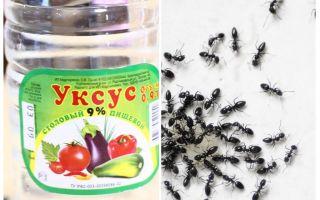 Vinagre contra formigas no jardim