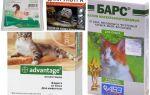 Gotas na cernelha das pulgas para gatos e gatinhos