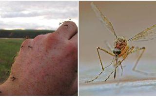 Em que países e cidades não há mosquitos