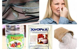 Como se livrar do cheiro de ratos