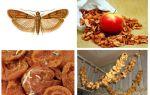 O que fazer se a toupeira se iniciar em maçãs secas