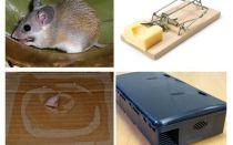 Como remover ratos de uma casa particular