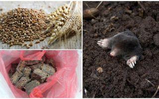 Como e o que envenenar as toupeiras