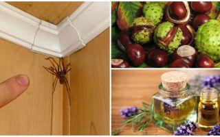 Métodos e ferramentas para aranhas em um apartamento ou casa particular