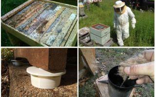 Como se livrar das formigas nos remédios populares do apiário