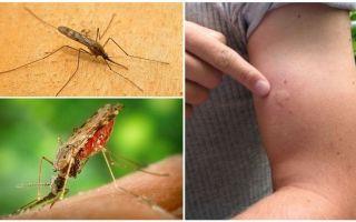 O que fazer se você for mordido por um mosquito anófeles