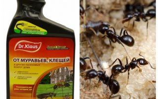 Dr. Klaus de formigas e carrapatos