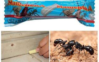 Lápis Masha de formigas
