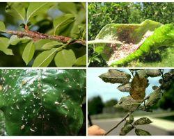 Como se livrar de pulgões nas árvores