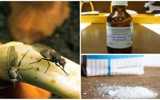 Como se livrar da mosca da cebola