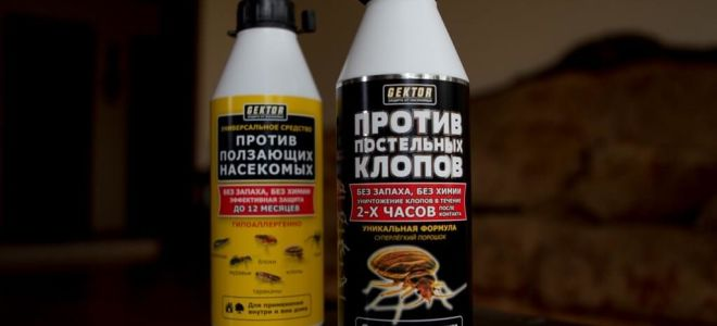 GEKTOR contra percevejos e insetos rastejantes