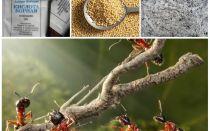 Lutando formigas no jardim remédios populares enredo