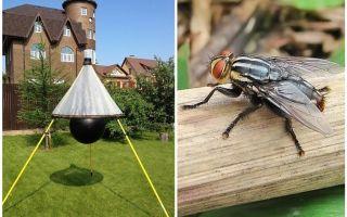 Armadilhas caseiras para moscas e moscas