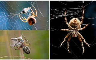 Como a aranha tece uma teia
