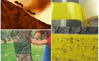 Como lidar com as formigas nas árvores do jardim