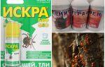 Como lidar com formigas e pulgões em macieiras