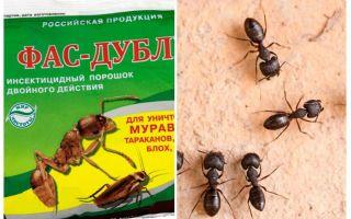 Meios Fas-Double de formigas