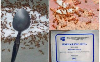 Como lidar com as formigas vermelhas