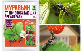 Formigas 10g de formigas: instruções de uso e comentários