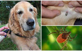 Sprays para cães contra carrapatos e pulgas