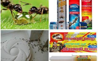 Como destruir formigas e formigueiro