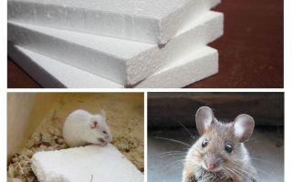 Os ratos roem espuma