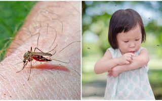 Quantos dias a picada do mosquito vai?