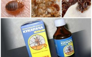 Remédio Cucaracha para percevejos