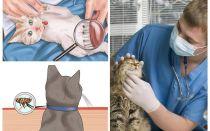 Como se livrar das pulgas em um gato ou gato em casa