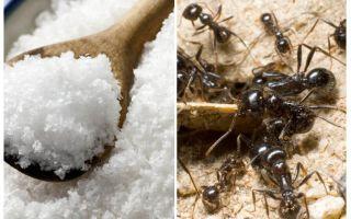 Sal contra formigas no jardim