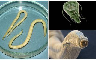 Comparação de Giardia e Worms